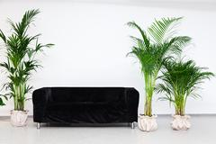 Black sofa in modern minimalism interior with green plants Stock Photos