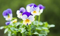 seasonal flowers - stock photo