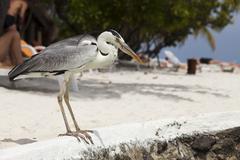 Heron - stock photo