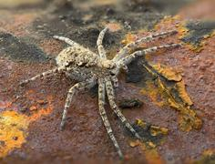 Macrophoto of spider on a rusty surface Stock Photos