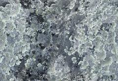 rock surface covered with lichens - stock photo