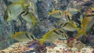 Stock Video Footage of Marine fish