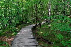 Wooden walkway in the forest - stock photo