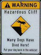 doggie danger - stock photo