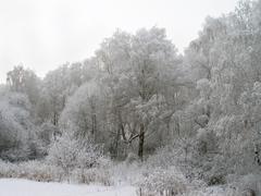 Trees in hoarfrost Stock Photos