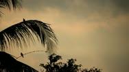 Bali Coconut Tree Stock Footage