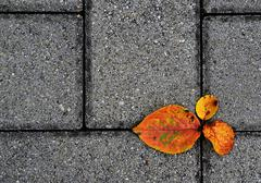 Autumn footpath Stock Photos