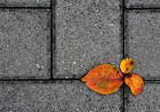 Autumn footpath Stock Photos