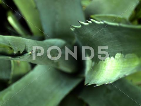 Stock photo of green thorns