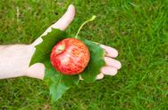 Stock Photo of apple in hand with leaves on the background of grass