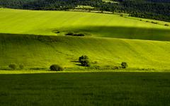 Green meadow Stock Photos