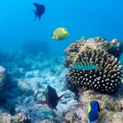 ecosystem of tropical coral reef, maldives - stock photo