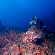 Vedenalainen valokuvaaja ja kala Kuvituskuvat