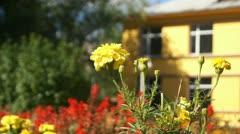 Yellow Autumn Flower Stock Footage