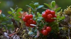 Berrys Stock Footage