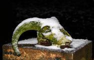 Stock Photo of ram's skull