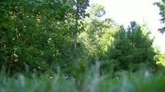 XCU Grass w/ Rackfocus - stock footage