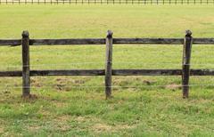 Horses wooden fence Stock Photos