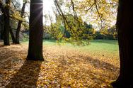 Trees and leaves in the autumn forest Stock Photos