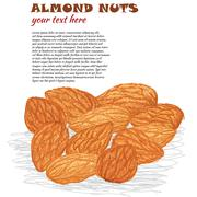 Stock Illustration of almond nuts