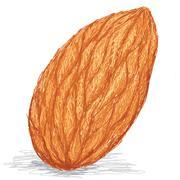 Almond nut Stock Illustration