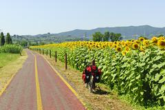 lane for bicycles and sunflowers in tuscany - stock photo