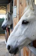 Horses in stables - stock photo
