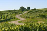 Winding road in the vineyards of alsace Stock Photos
