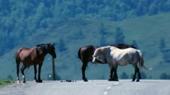 Horses on the road Stock Footage