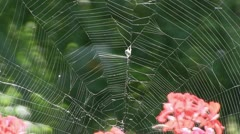 Stock Video Footage of Cobweb