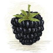 Blackberry Stock Illustration