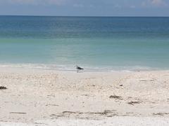 seagull on a beach - stock photo