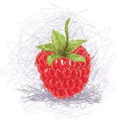 Raspberry Stock Illustration