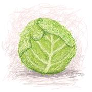 Cabbage vegestable Stock Illustration