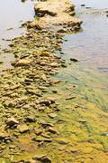 Polluted river detail Stock Photos