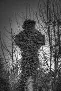 Stock Photo of ivy covered cross bradford cemetery