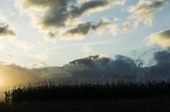 Maissi alalla auringonlaskun Kuvituskuvat