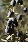 bunch of olives - stock photo
