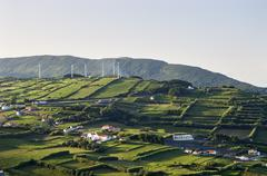 hedge landscape of faial, azores - stock photo