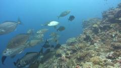 A SCUBA Diver watches a large school of silver fish Stock Footage