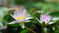 lotus5 - stock footage