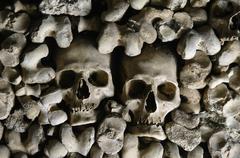 human skulls - stock photo