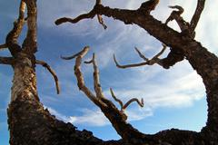 Haunted Spooky Branches - stock photo