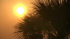 Tropical Sunrise and Palm Tree - HD 720 - stock footage