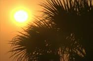 Tropical Sunrise and Palm Tree - NTSC Stock Footage