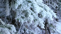 Snow packed evergreen tree in Beautiful Rocky Mountains Stock Footage