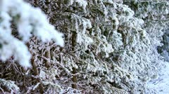 Evergreen trees covered in snow in the beautiful Rocky Mountains Stock Footage