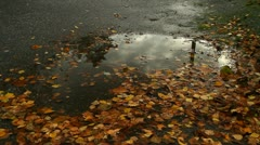Puddle of water, autumn leaves Stock Footage