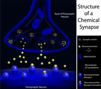 Structure of a synapse Stock Illustration