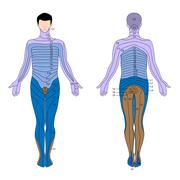 Dermatome - stock illustration